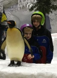 The only place in the world you can interact with penguins in this way.